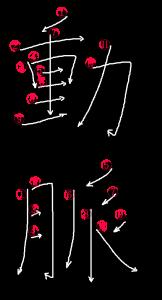 Japanese Word for Artery